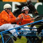 Two typically temperamental celebrities were feeling sulky during NZ Trotting Cup Day at Addington Raceway in Christchurch, New Zealand.