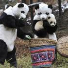 Two moonlighting mascots attempt to pull a fast one on a cub at China's Wolong National Nature Reserve. No word if the cub is from Chicago, but bears are usually found there.