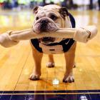 The Butler Bulldogs mascot has a bone to pick with the Xavier Musketeers at historic Hinkle Fieldhouse in Indianapolis.