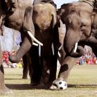 While their counterparts in Iowa began battling for the Republican presidential nomination, a pack of pachyderms near Katmandu engaged in an exhibition soccer match as well as other sports and activities in the annual Elephant Race event.
