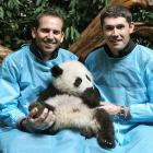 The happy couple were sad to hear the panda would not be coming home with them.