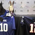 The big football game in Indianapolis will be between the Giant Schnauzers and the Boston Terriers. Here are two of the players at Media Day. The Giant Schnauzer is a three-point underdog.