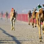 Technology marches on in Kebd, Kuwait, where robot-driven camels lit up a six-kilometer race that left everyone breathless.