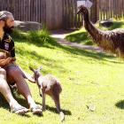 The new wildlife exhibit in Sydney features a wallaby, a kangaroo, an emu and a Sebastien Chabal (an exotic French rugby union player).