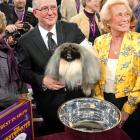 Malachy, a Pekengese, won Best in Show on Tuesday.