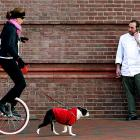 For discerning ladies who do not wish to drive shoes, there's always the trusty pooch-powered unicycle, as seen in Baltimore on March 6.