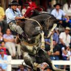 A Uruguayan gaucho rides an untamed horse during the Patria Gaucha Festival in Tacuarembo, Uruguay.
