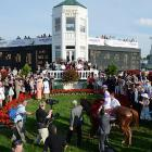 I'll Have Another entered the winner's circle despite a rookie jockey, a more famous stable pony, and a price tag of just $11,000 as a yearling.