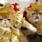 Elsewhere in the world of haute couture, a pair of furballs were on display at a two-day exhibition in Minsk, Belarus.