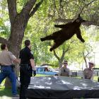 Speaking of dropping in, a bear that wandered into a University of Colorado dorm complex fell from a tree after being tranquilized. (Kind of reminds you of your own college daze, doesn't it?) The bear reportedly had a prominent role in a beer commercial that you can watch by   CLICKING HERE