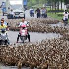 A big box of quackers was spilled on a road in Taizhou, Zhejiang Province, China on June 17.