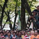 Filipinos climb trees to get a better view of the Pacquiao-Bradley fight.