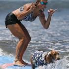 Dogs Surfing
