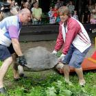 At the Riga Zoo, Latvia's former weightlifting champ (left) and Olympic javelin thrower (right) were seen tuning up for the much-anticipated Olympic tortoise toss.