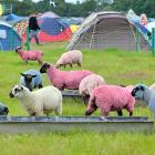 As the London Summer Olympics draw nigh, the traditional colored sheep have been rolled out at Henham Park Estate in Southwold, UK.