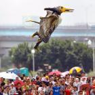 From New Taipei City, Taiwan, evidence that man's ongoing attempt to fly under his own power is one of his most noble and dignified pursuits.