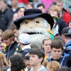 In other entertainment news,  Abcess Hollywood  paparazzi spotted a retired muppet enjoying Appalachian State's 55-14 squeaker over Coastal Carolina at Kidd Brewer Stadium in Boone NC.