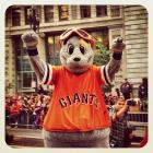 Mascot Lou Seal at today's Giants parade in SanFrancisco.