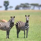 These two zebras caught my eye.