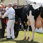 Udderly cowed, the Royal couple milked the Canterbury A&P Show in New Zealand for all it was worth.