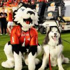 The Northern Illinois Huskies mascot discovers an imposter at the Orange Bowl.