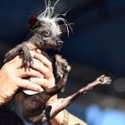 Mustard Minute: SweePee Rambo wins World's Ugliest Dog competition IMG