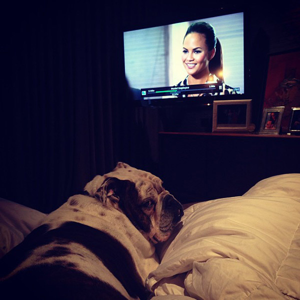 @chrissy_teigen: Pooey giving his signature asshole face while watching #modelemployee with mom and I