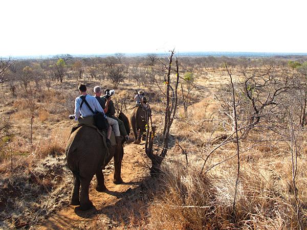 An elephant train in Zambia, 2012 issue.