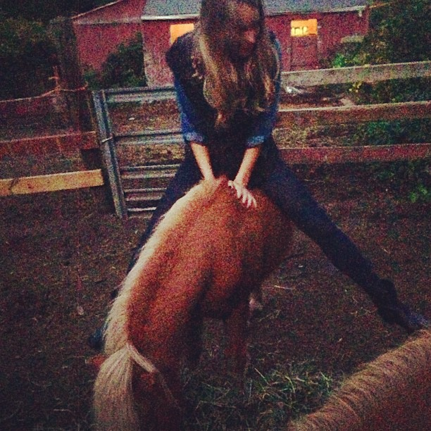 @hanni_davis: Family reunion obviously involves a mini horse! #harrypotter