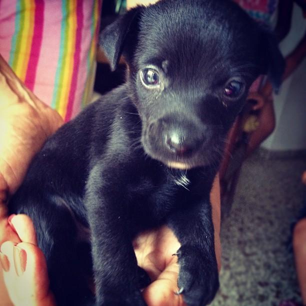 Cutie #puppie