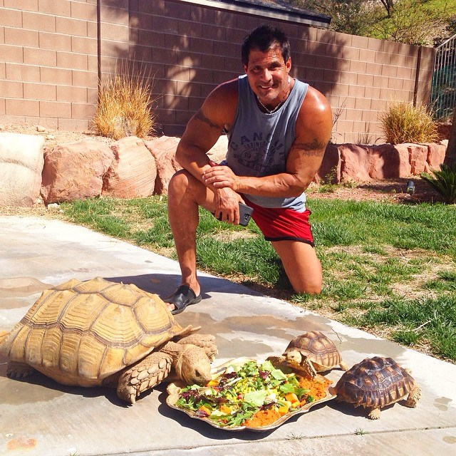 Jose Canseo and turtles