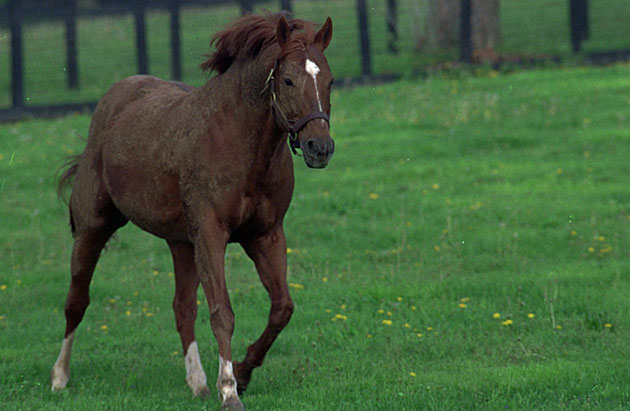 Secretariat, photographed in the spring of 1989, would be dead by that fall.