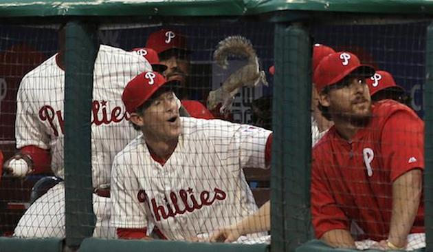 squirrel chase utley philadelphia phillies dugout flop