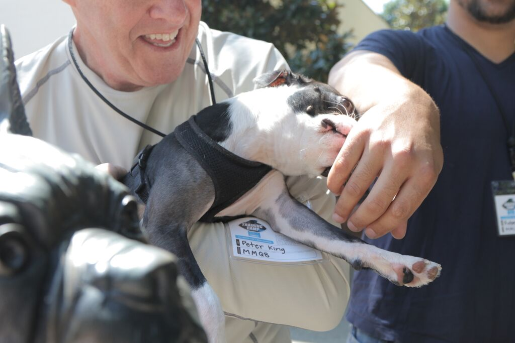 At Panthers Camp, The MMQB team meets Blitz, Wofford College's Boston Terrier Mascot. Photo: John DePetro/The MMQB