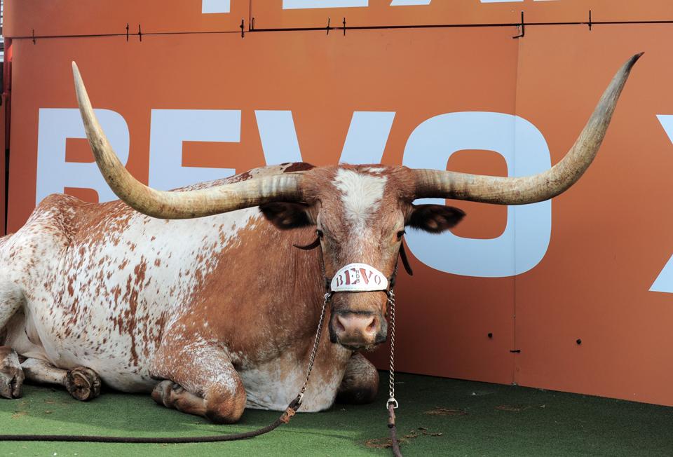 Texas mascot Bevo