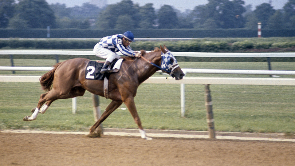This is Secretariat, a different horse with a horse face.