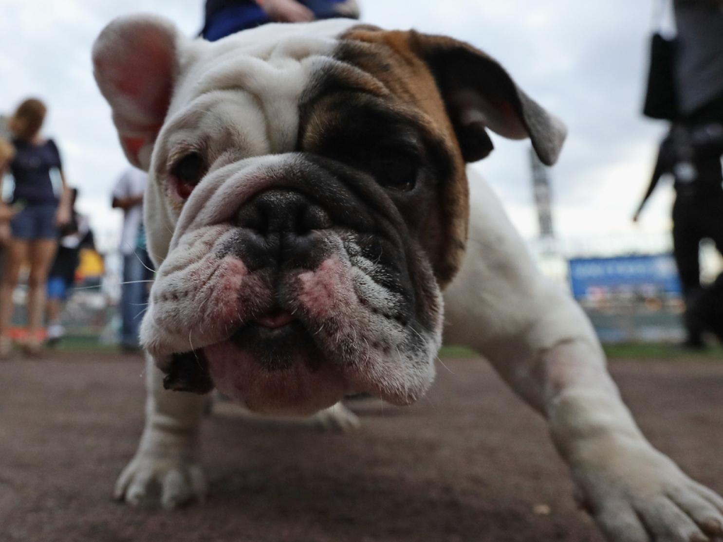dog us cellular field world record 3