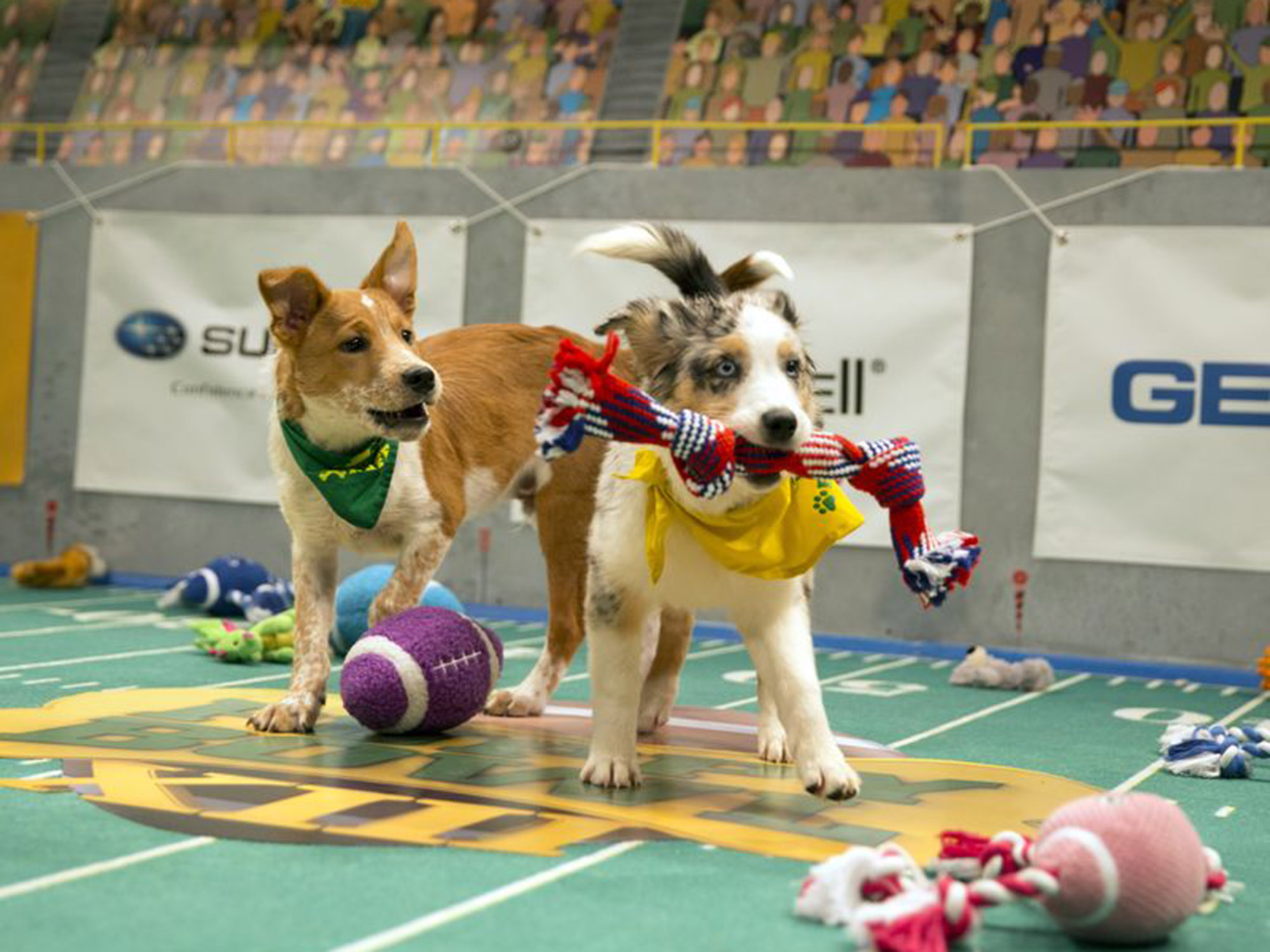 Puppy Bowl matchups Super Bowl Sunday | SI.com - photo#3