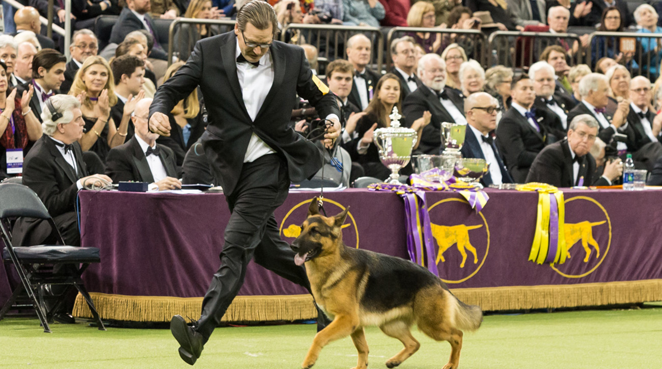 Westminster Dog Show Order
