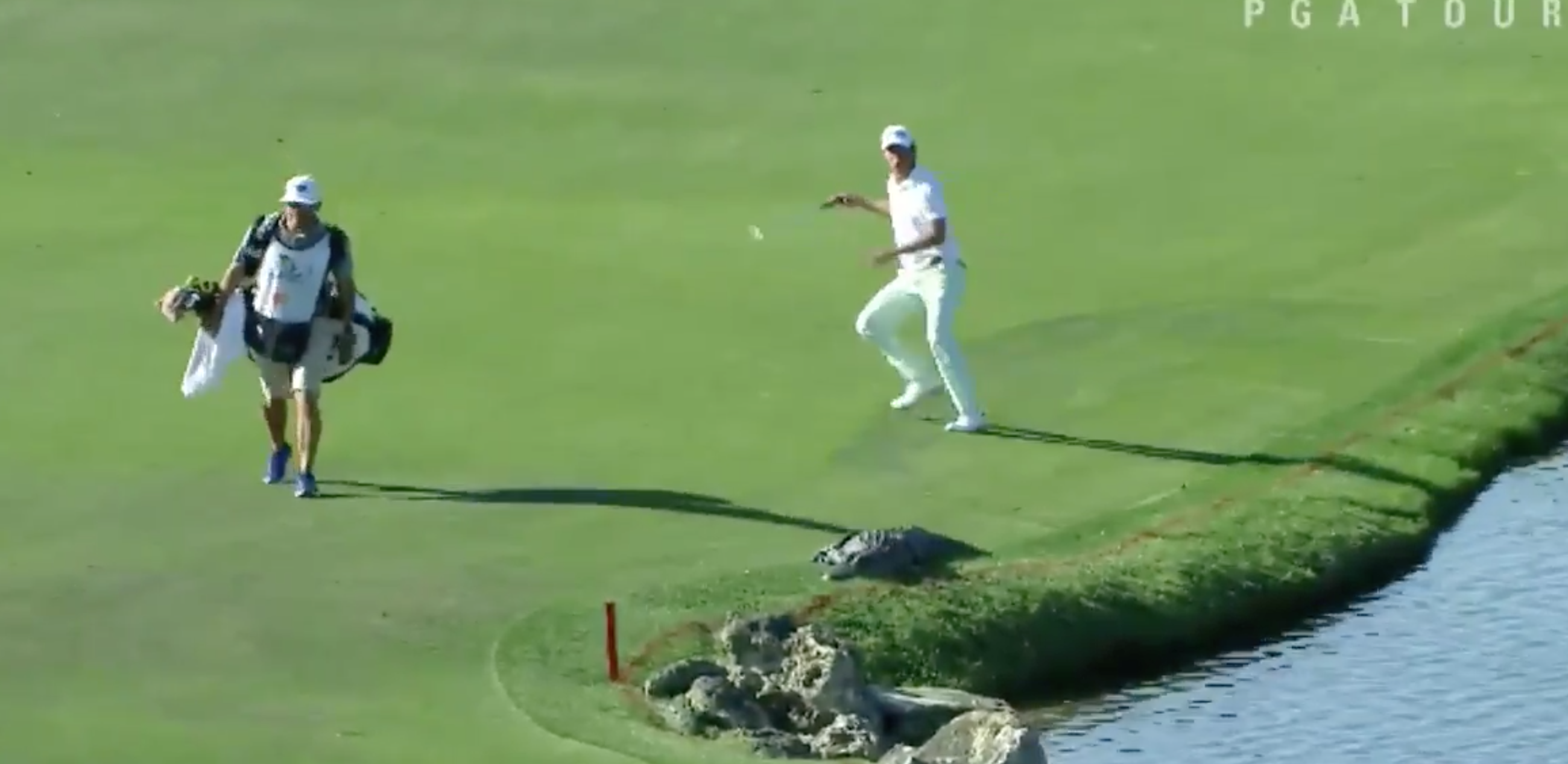Smylie Kaufman didn't even see the alligator coming.