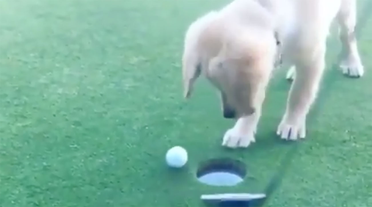 There's no feeling quite like watching that putt drop, right buddy?