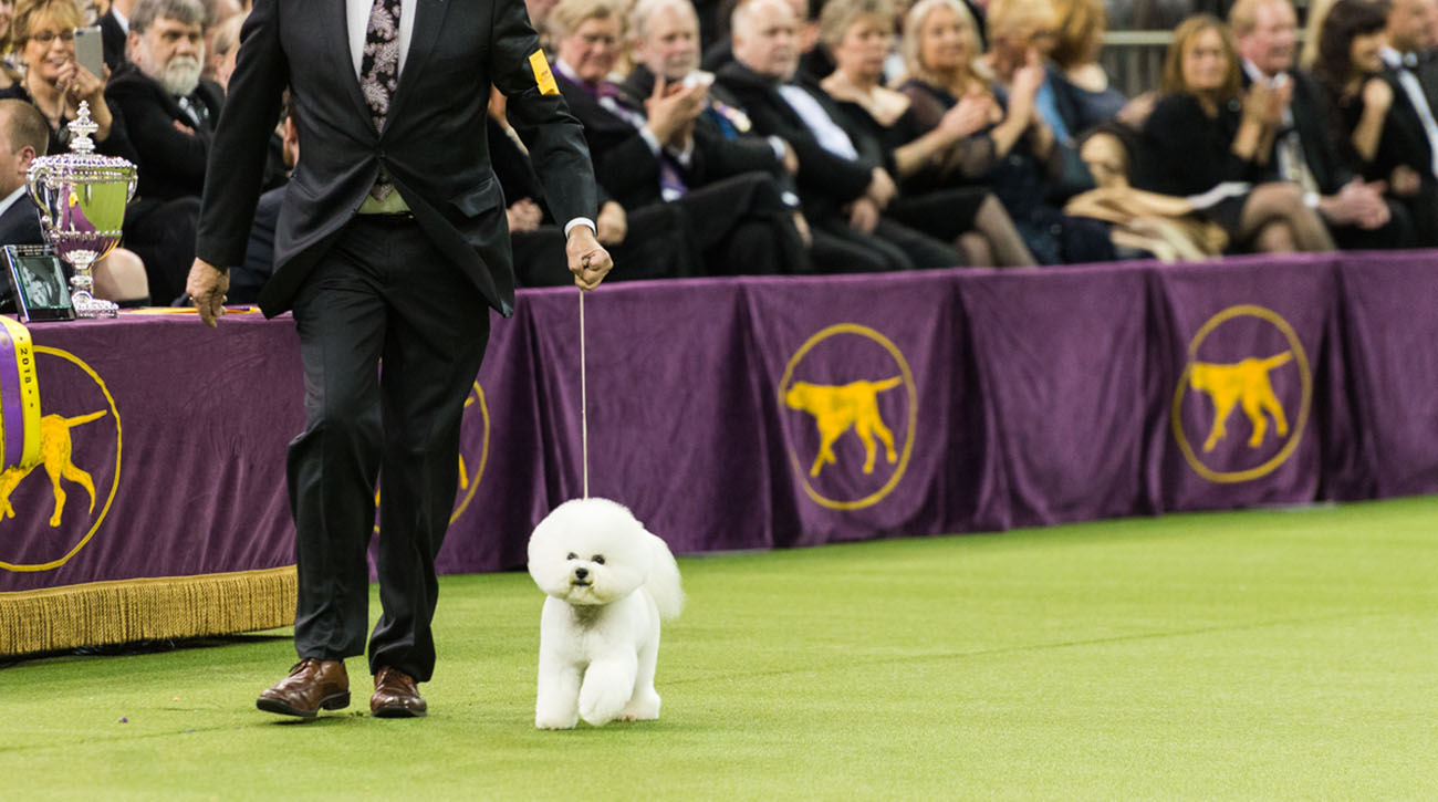 westminster dog show results 2018 flynn delared best in show si com