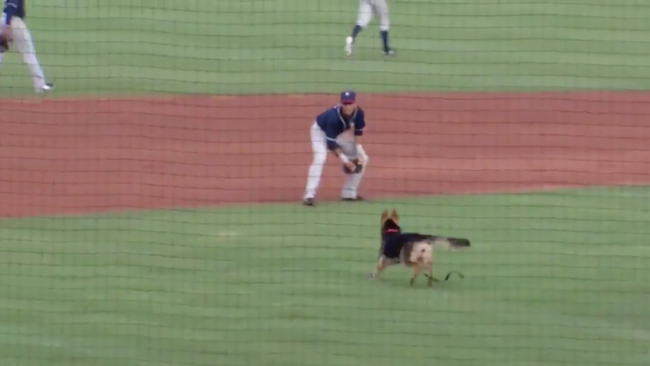 Tulsa Drillers dog delay video