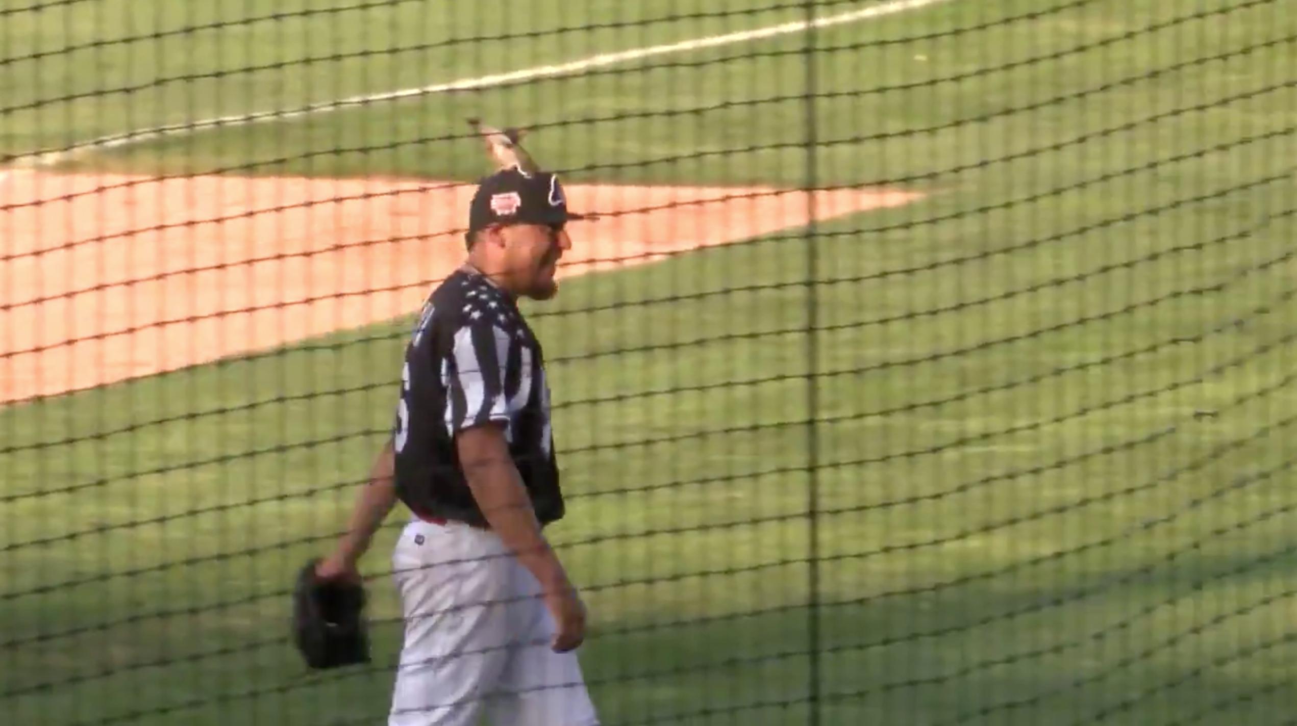 Cardinals prospect Jesus Cruz picks up bird (video)