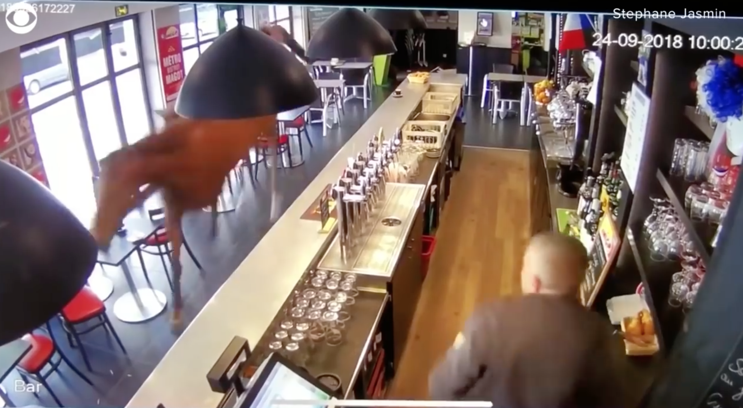 Horse in bar in French city of Chantilly (video)