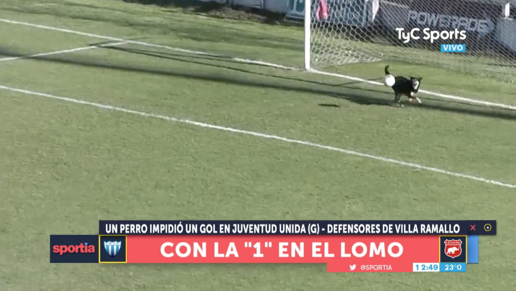 Dog makes save in soccer game in Argentina (video)