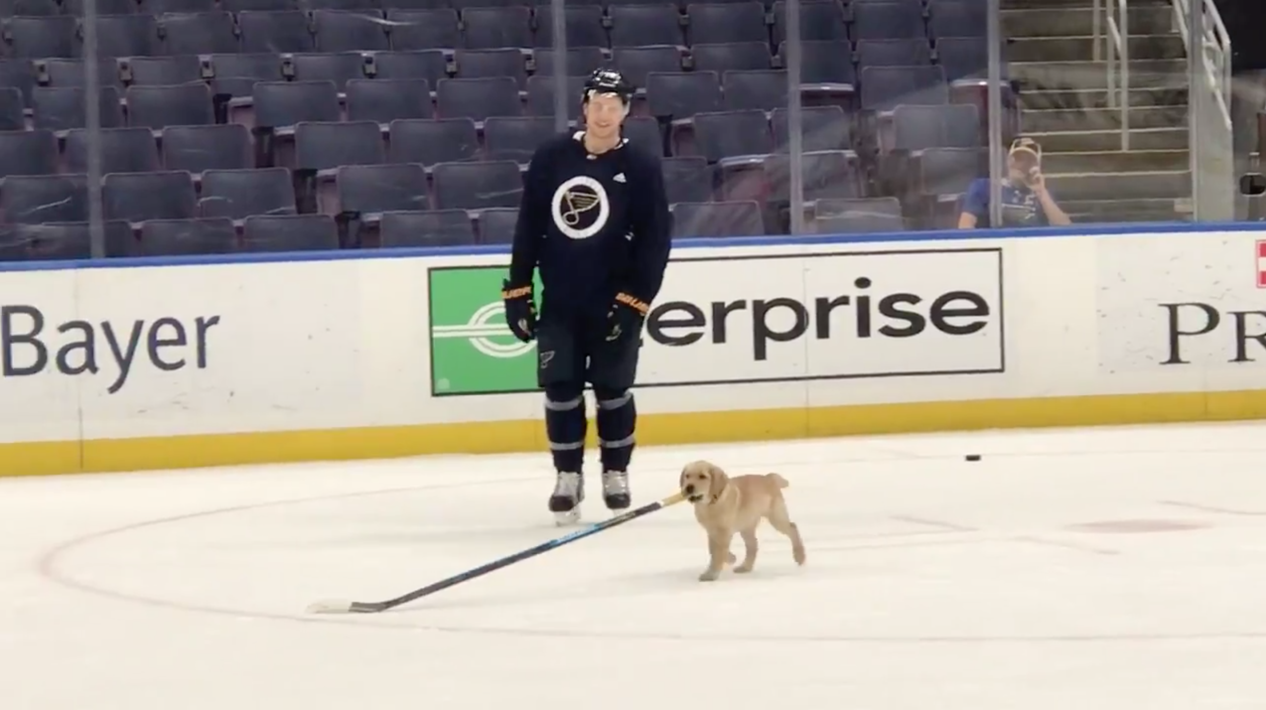 St. Louis Blues team puppy Barclay practices on ice (video)