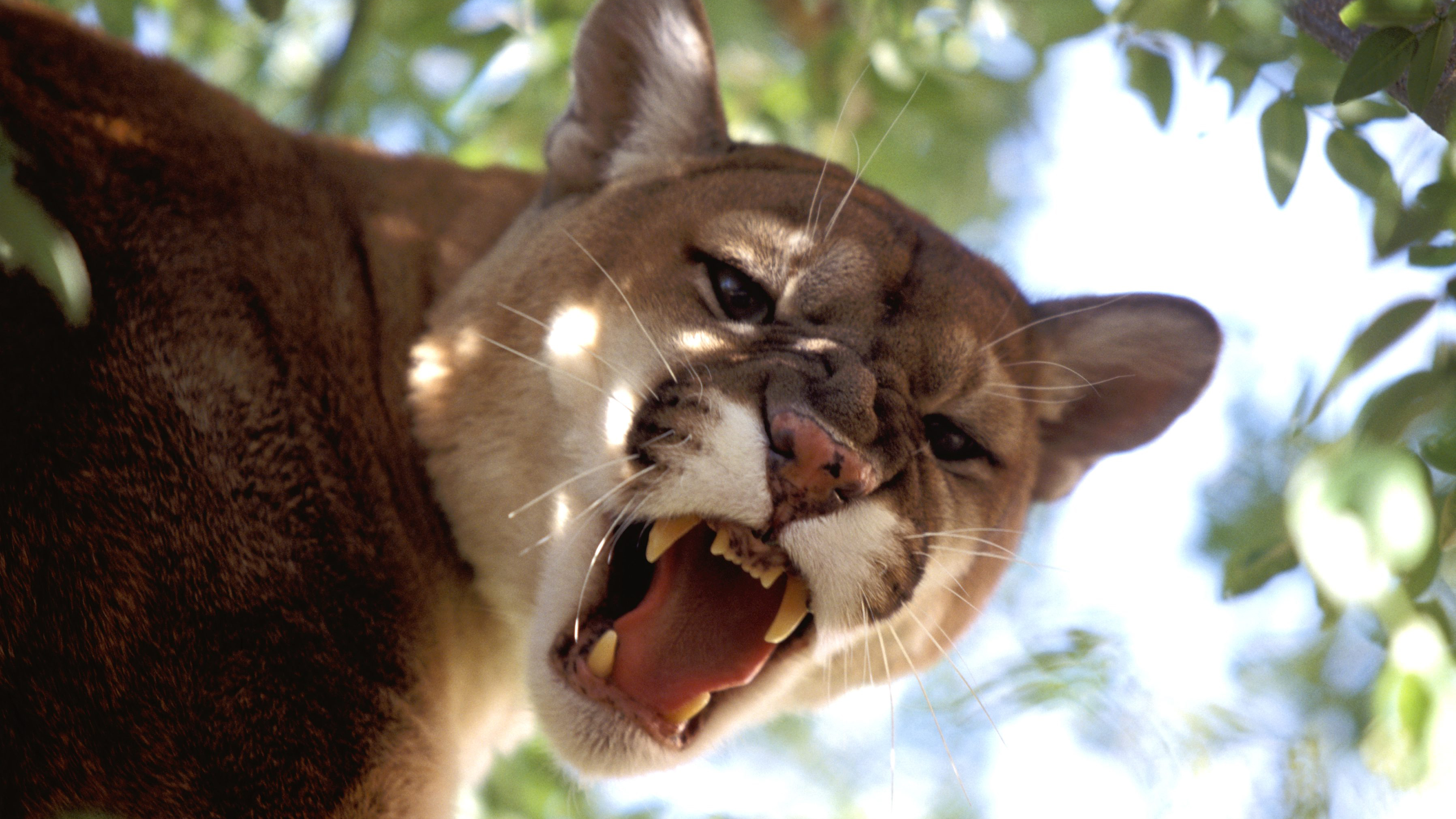 645fd84e2 Colorado runner kills mountain lion with bare hands after attack | SI.com