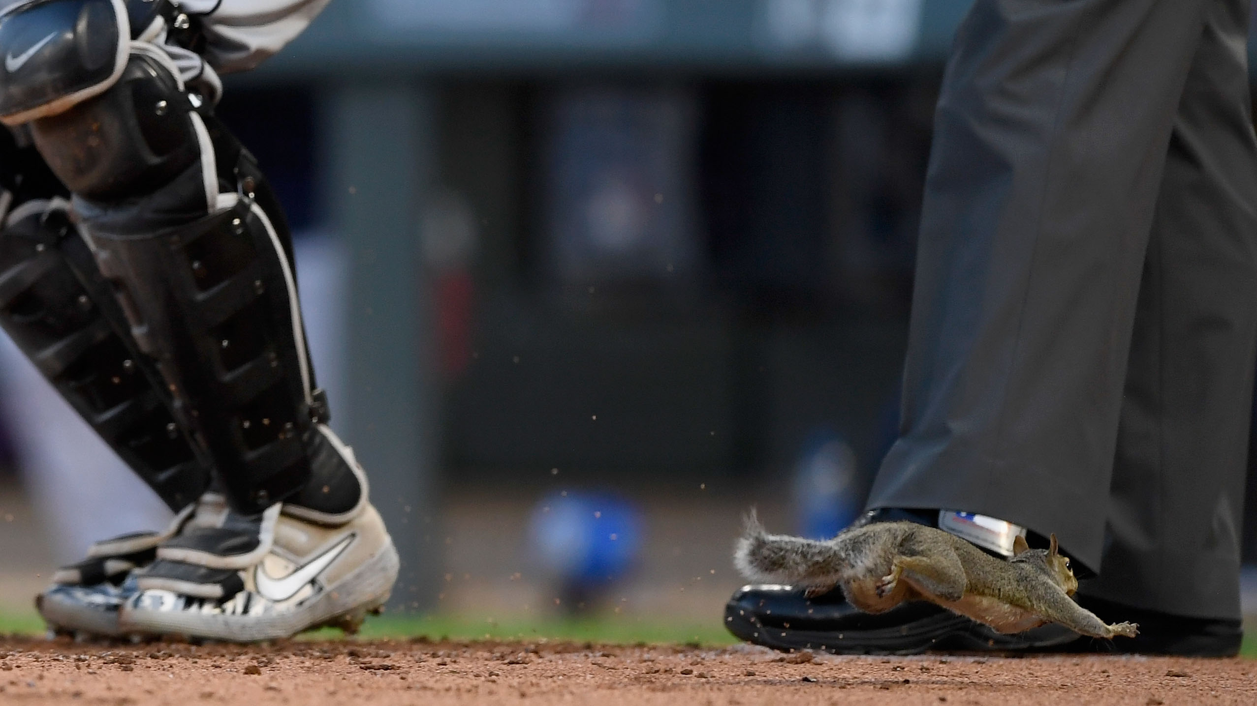 Twins squirrel runs through Max Kepler's legs (video)