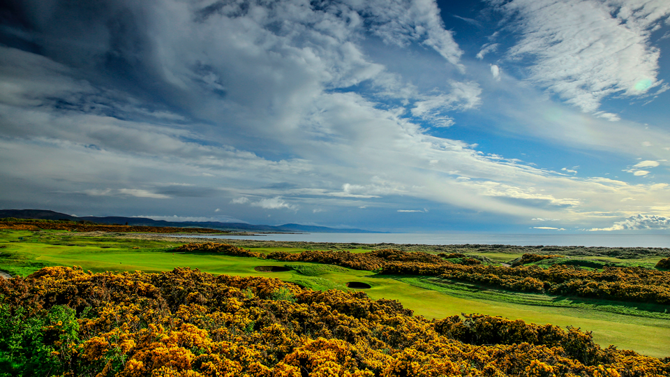 The golden gorse is glorious at Royal Dornoch--as long as you don't sail your slice into it.